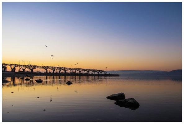 Morgendämmerung an der Radolfzeller Mole - mit Blick auf die Halbinsel Höri 2670