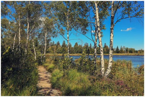 Uferlandschaft mit Moorbirken am Großen Riedsee 3786