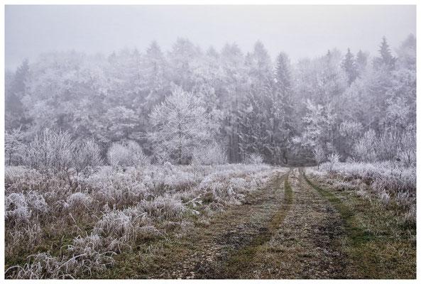 2102 Winterlandschaft in der Nähe vom NSG Heudorfer Ried