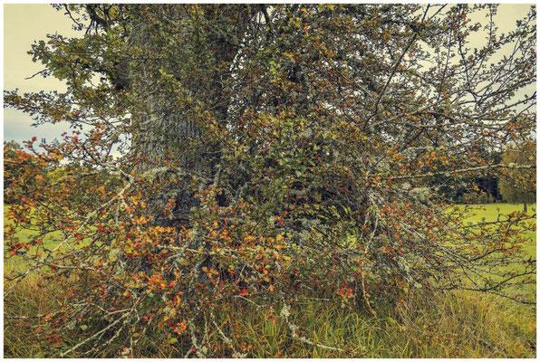 Herbstliche Farben im Irndorfer Hardt 8608