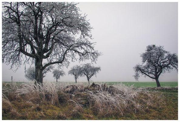 2051 Landschaft mit Raureif bei Mahlspüren im Hegau