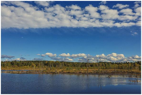 Uferlandschaft Schwenninger Moos 4118