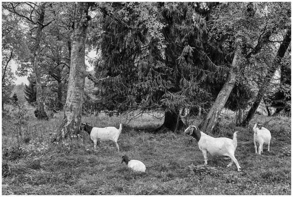 Landschaftspflege im Irndorfer Hardt 8575