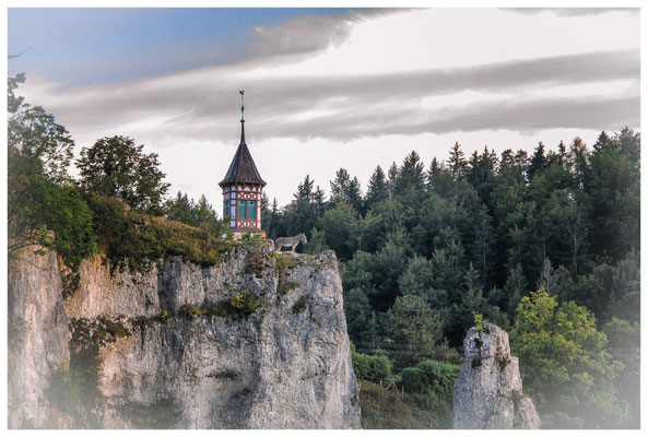 Neugieriger Esel in luftiger Höhe vor dem Kirchturm St. Anna in Unterschmeien 4305