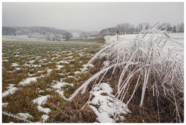Winterlandschaft mit Raureif bei Stockach 2533