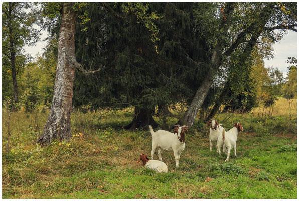Landschaftspflege im Irndorfer Hardt 8576