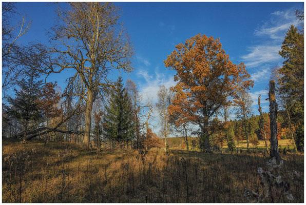 Landschaft im Irndorfer Hardt 4545