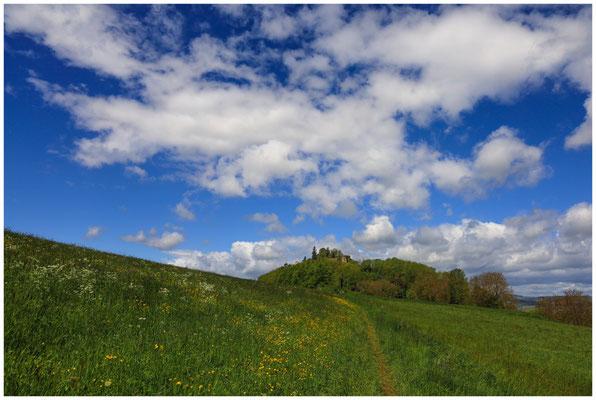 Pfad durch die Frühlingswiese zum Mägdeberg 7100