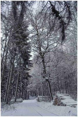 Verschneiter Wald 5690
