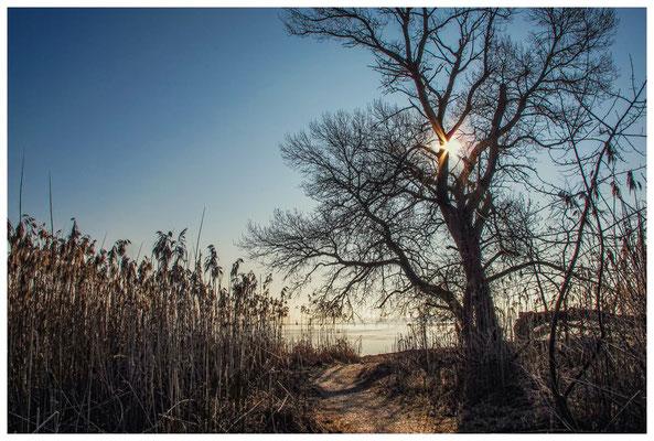 Naturschutzgebiet Mettnau 2795