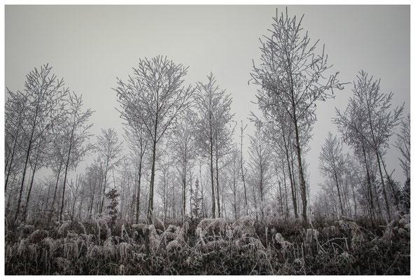 2165 Winterwald