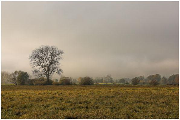 Riedlandschaft mit abziehendem Nebel 4760