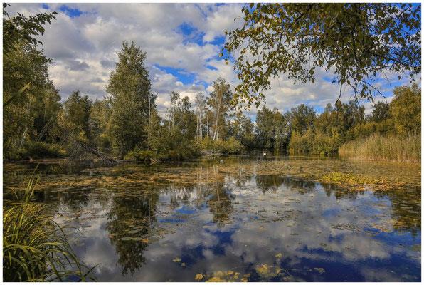 Teich am Riedlehrpfad bei Wilhelmsdorf 3693