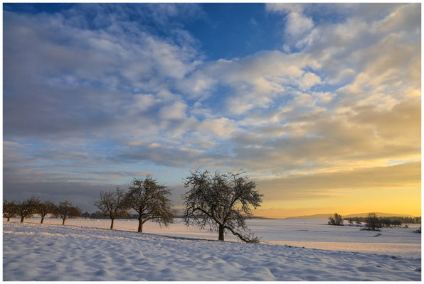 Landschaft bei Münchhöf mit Obstbäumen 5456