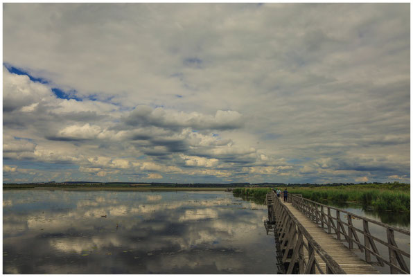Uferlandschaft Federsee 3373