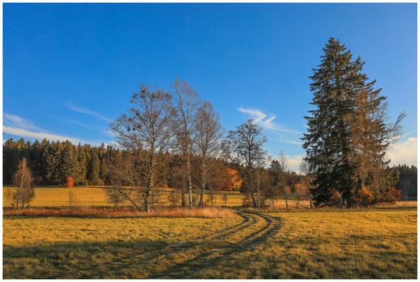 Landschaft im Irndorfer Hardt 4603