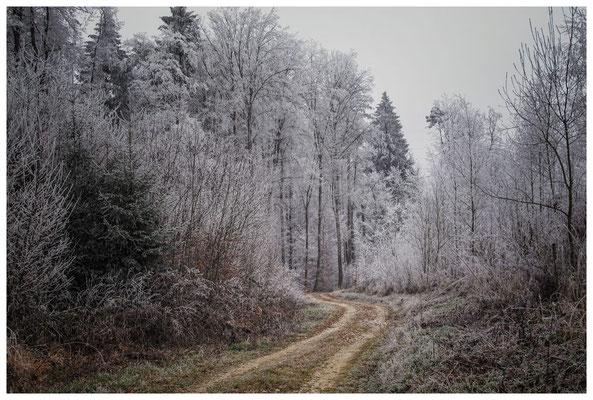 2163 Winterwald