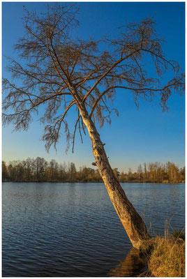 Uferlandschaft Nillsee 6727