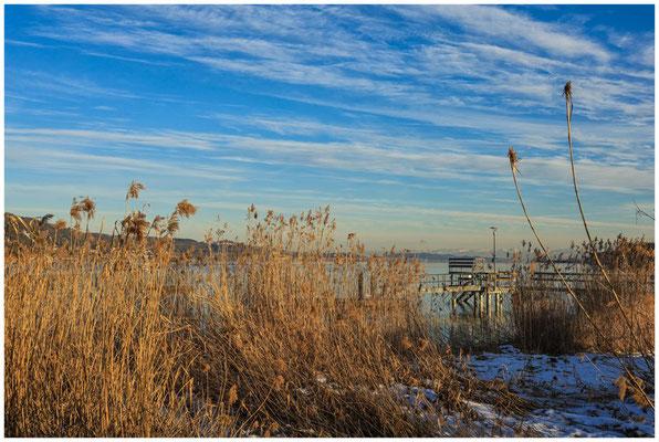 Uferbereich Bodman mit Blick auf den Überlinger See  5914