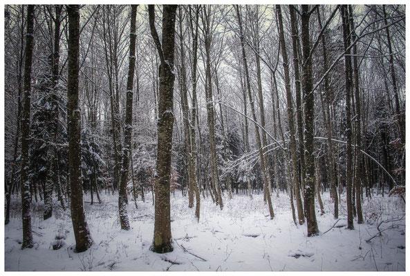 2268 Winterwald