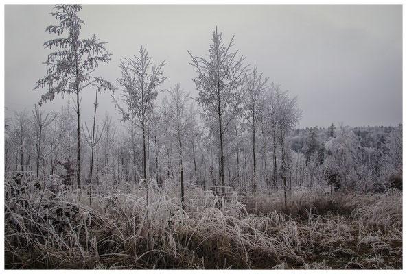 2172 Winterwald