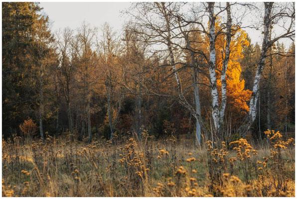 Landschaft im Irndorfer Hardt 4573