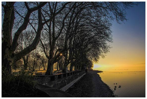 Morgenstimmung kurz nach Sonnenaufgang im Kurpark auf der Mettnau - Radolfzell 2754