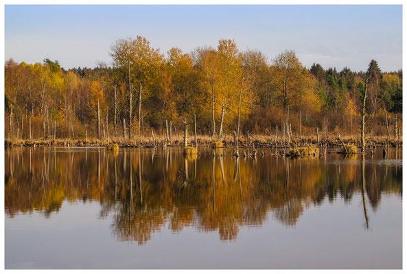 Uferlandschaft Schwenninger Moos 1796