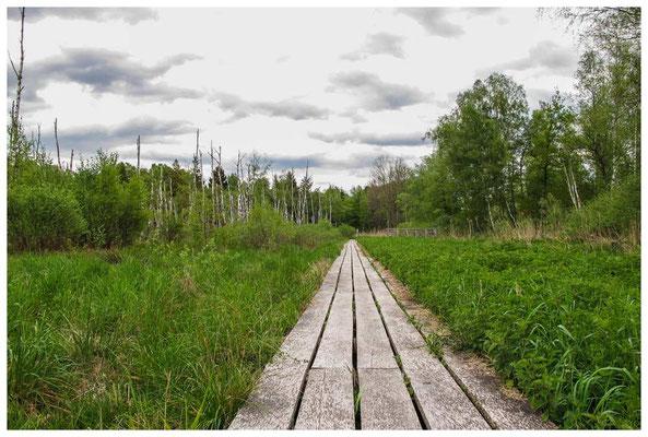 4519 Bohlenweg durch das Ried