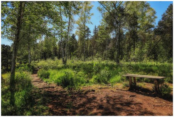 Wanderweg mit Holzbank im Wurzacher Ried 3239