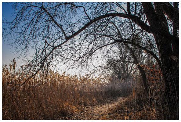 Naturschutzgebiet Mettnau 2788