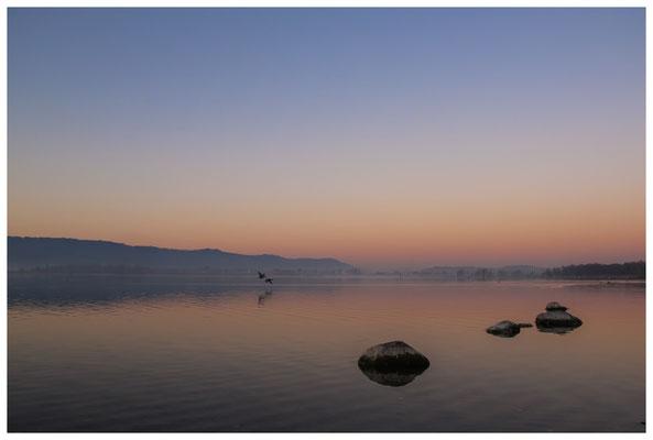 Morgendämmerung an der Radolfzeller Mole - mit Blick auf die Halbinsel Höri 2698