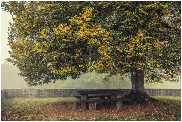 Herbststimmung am Hohentwiel 8099