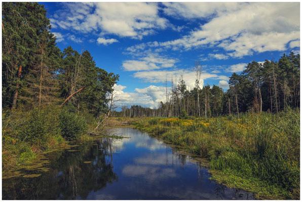 Wassergraben im Pfrunger-Burgweiler Ried 3650