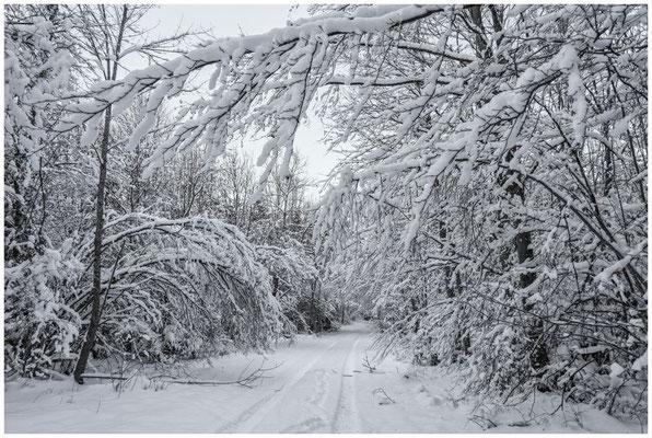 Verschneiter Winterwald bei Burg Wildenstein 5845