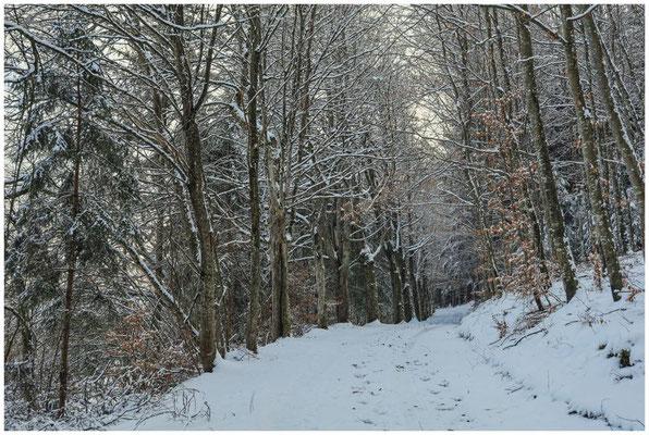 Verschneiter Waldweg 5439