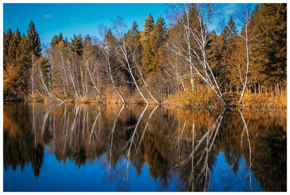 Uferlandschaft Moorteich 7210