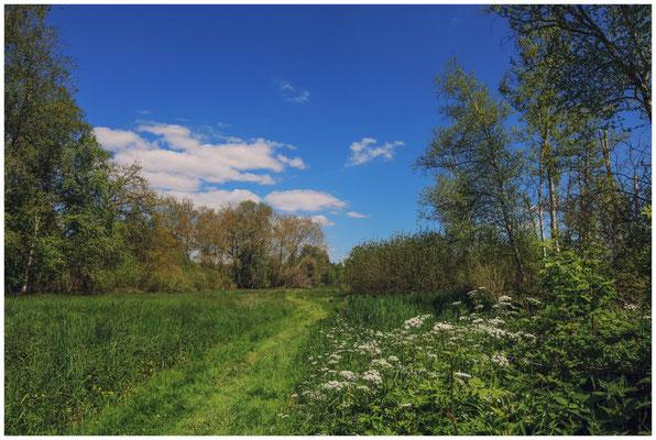 Frühlingslandschaft im Pfrunger-Burgweiler Ried 7313