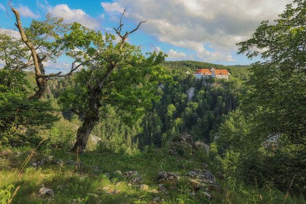 Burg Wildenstein 7785