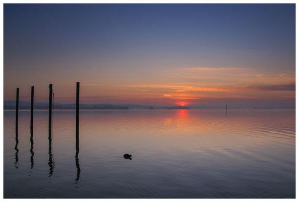 Morgendämmerung im Jachthafen Iznang 3243