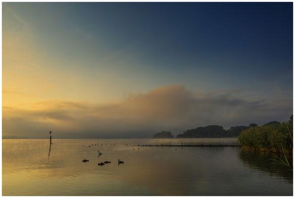 Morgenstimmung am Zeller See mit Schwanenfamilie 3562