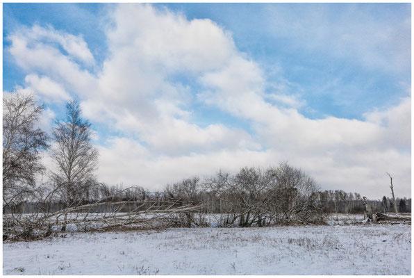 Landschaft im Pfrunger-Burgweiler Ried 5517
