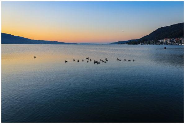 Blick auf den Überlinger See und Bodman mit Graugänsen 0125