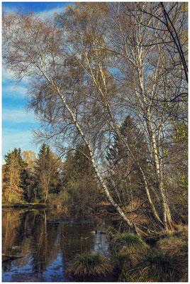 Uferlandschaft Großer Vogelsee 2164
