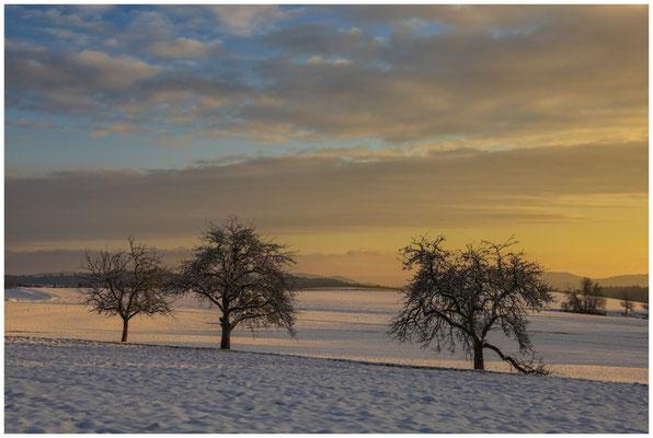 Landschaft bei Münchhöf mit Obstbäumen 5458