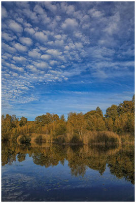 Teich am Riedlehrpfad in Wilhelmsdorf 4470