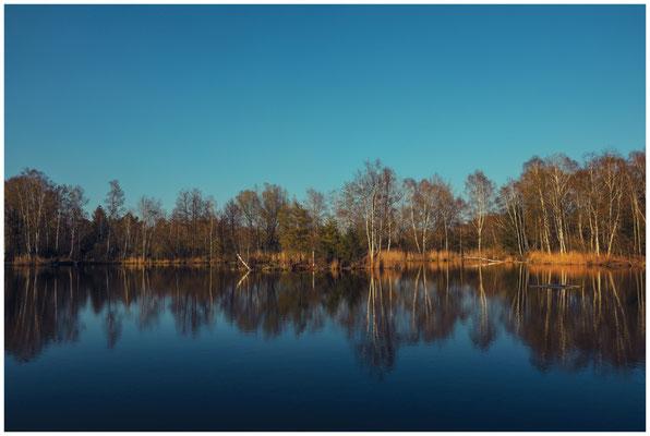 Uferlandschaft Moorteich im Pfrunger-Burgweiler Ried 6675