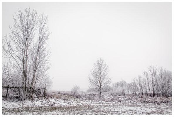 Winterlandschaft mit Raureif bei Münchhöf - Eigeltingen 2566