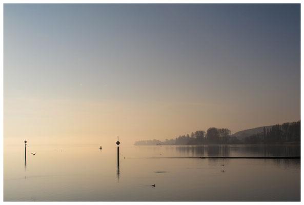 Der Zeller See bei Iznang im Morgenlicht 3412