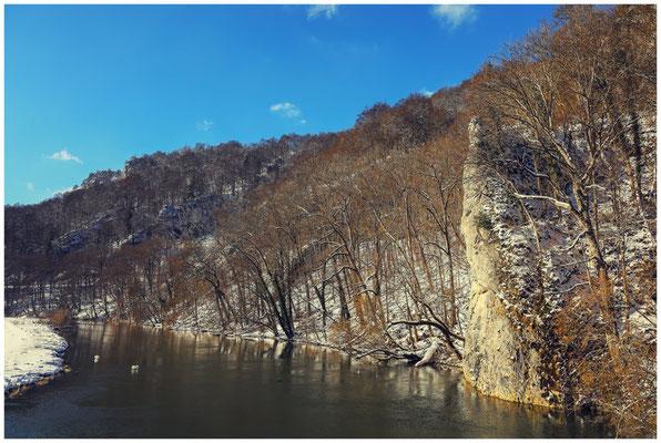 Die Donau mit zwei Schwänen 5792